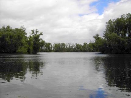 Rheinarm Fischereigewässer